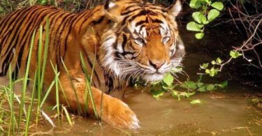 Tiger Reserves in India